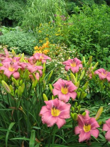 A section of the border, with daylily 'Chicago Princess' in the foreground