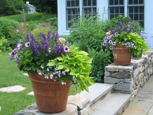 Admin amy ziffer - Best flower combinations for containers ...