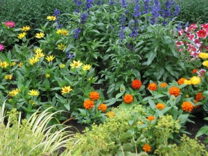 The garden in an early year, planted with flowers and herbs.