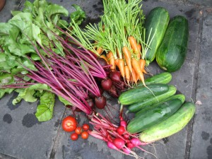 Produce from a previous year...before the critters got a clue.  It couldn't last!