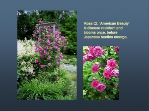 A slide from my Cottage Gardening show