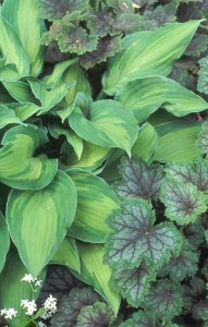 The best foliage plant ever? Hosta.