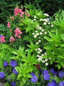 Cottage gardens feature many kinds of delightfully intermingled plants.